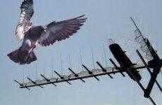 birds-spike2