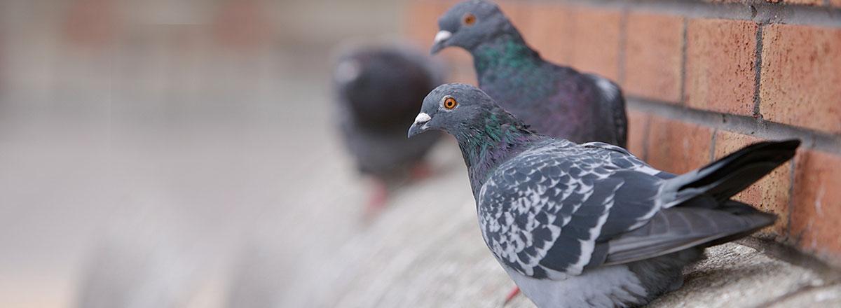 main_bird-main